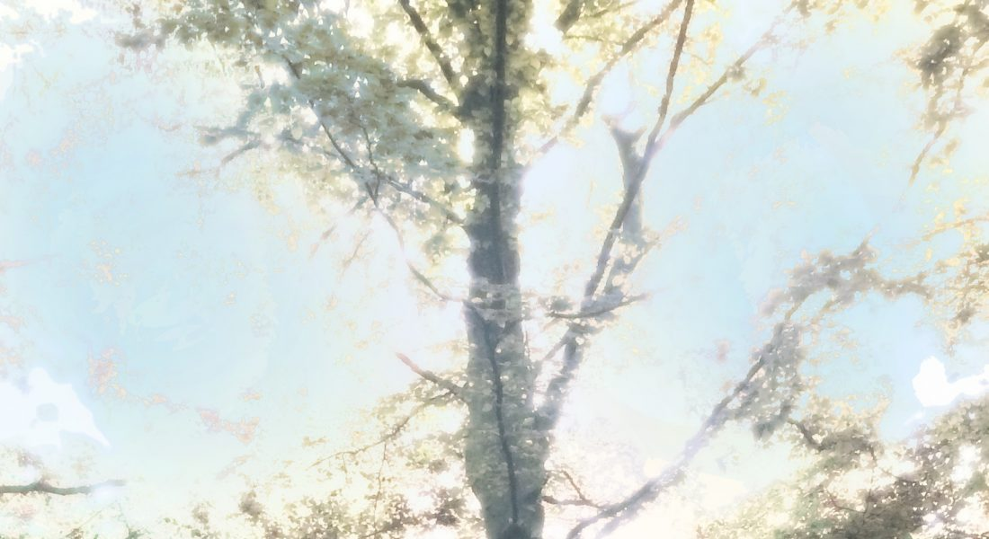image of tree